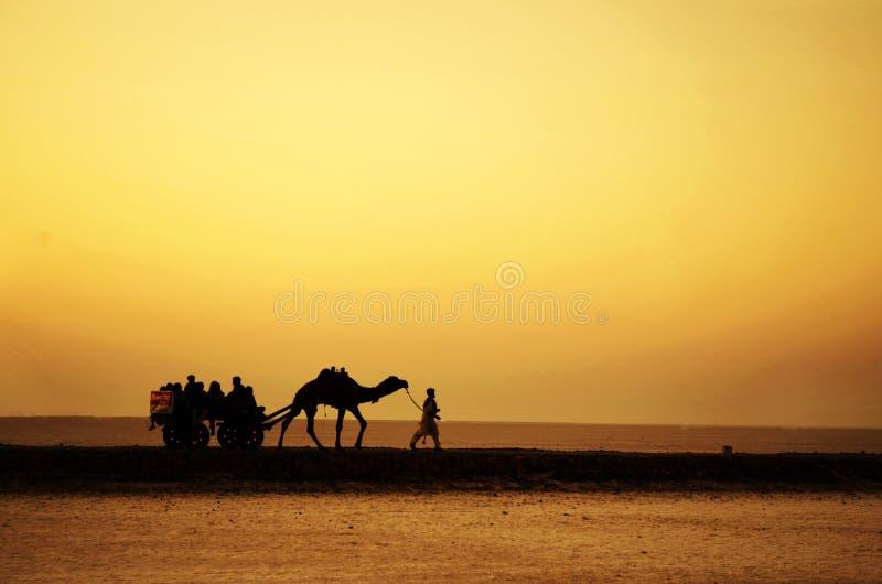 骆驼乘驾 免版税图库摄影