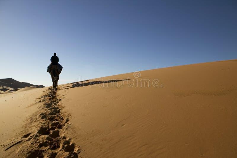 骆驼人骑马 库存图片