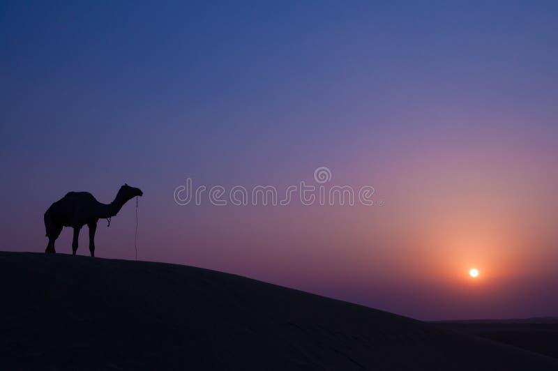Download 骆驼和风景 库存图片. 图片 包括有 骆驼, 背包, 敌意, 对比, 沙丘, 黑暗, 室外, 晚上, 徒步旅行队 - 62527343