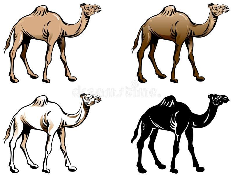 骆驼图画集合 向量例证