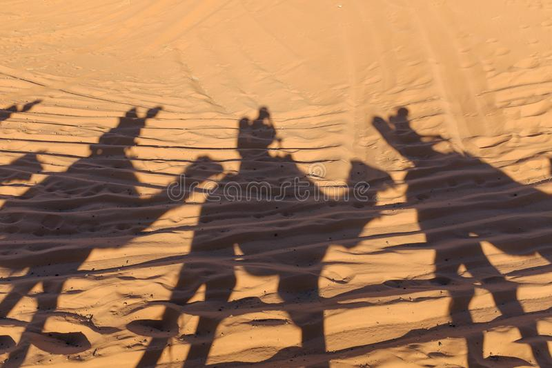 骆驼在沙子的有蓬卡车阴影 库存图片