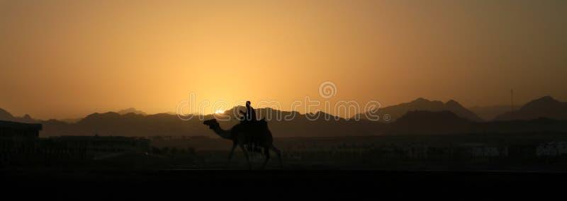 骆驼山西奈日落 库存图片