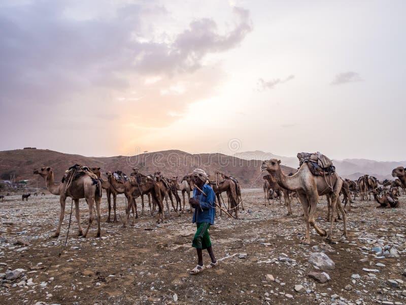 骆驼市场在远处地区在北埃塞俄比亚 免版税库存照片