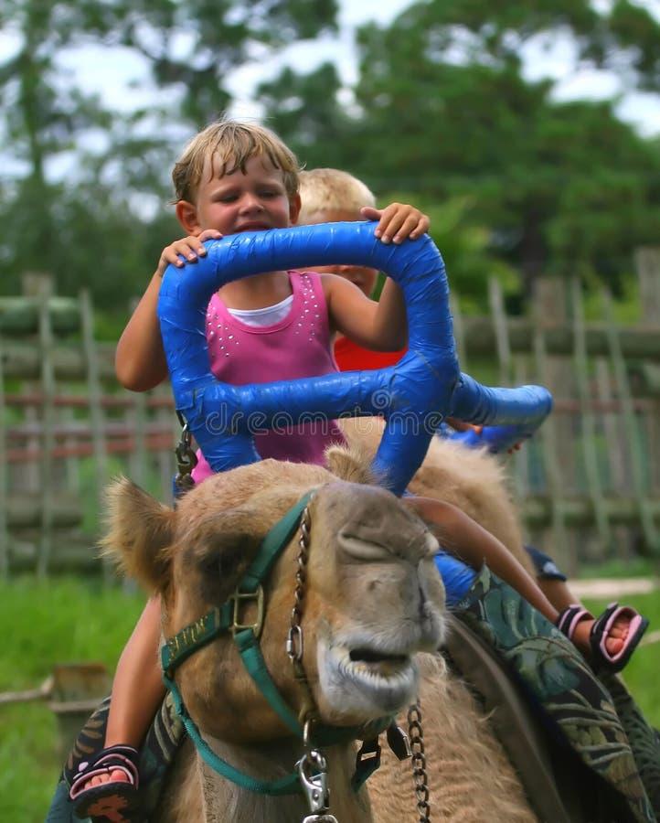 骆驼开玩笑骑马 免版税库存照片