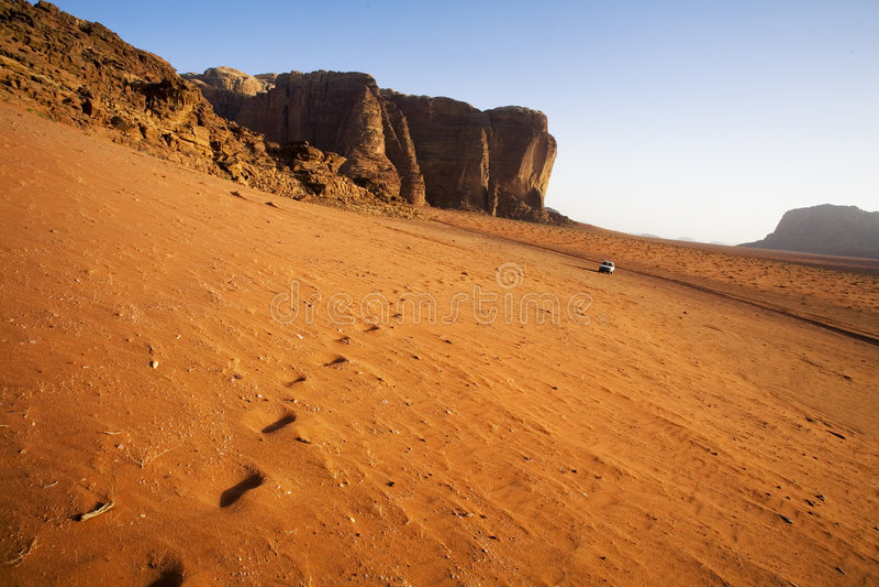 骆驼战利品 免版税库存图片