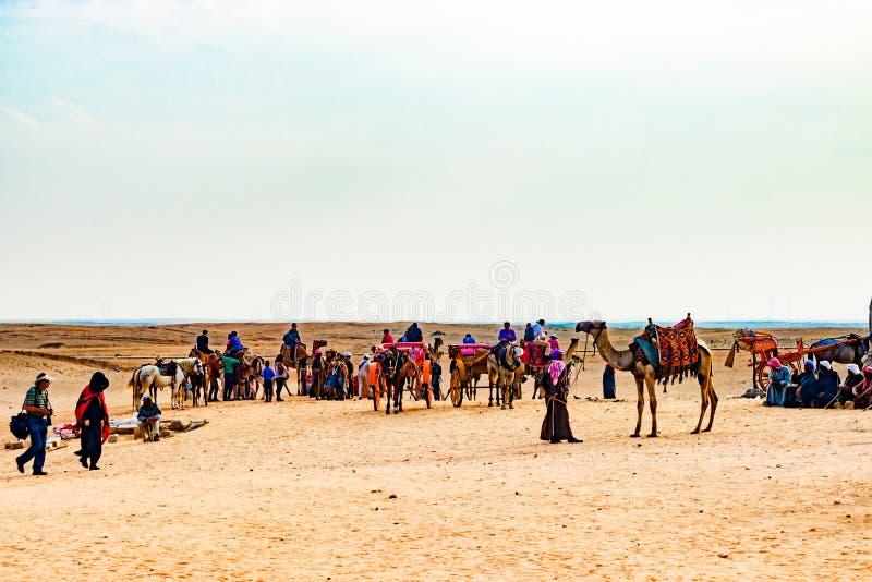 骆驼有蓬卡车在埃及 免版税库存照片