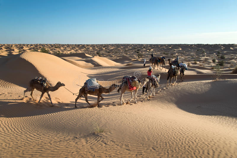 骆驼有蓬卡车在撒哈拉大沙漠的沙丘沙漠 免版税图库摄影