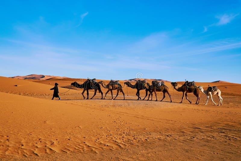 骆驼有蓬卡车在撒哈拉大沙漠 库存照片