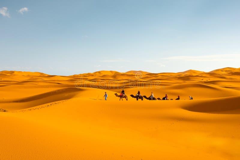 骆驼有蓬卡车在撒哈拉大沙漠Merzouga,摩洛哥 免版税图库摄影