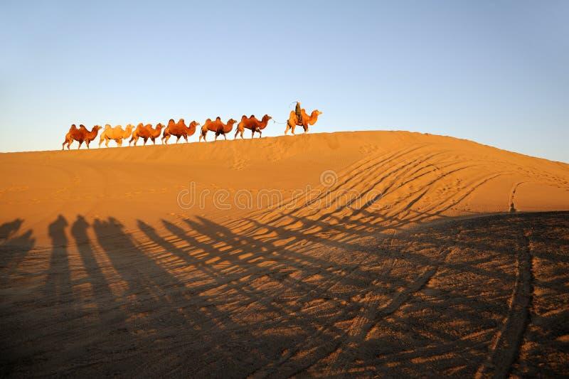 骆驼有蓬卡车在沙漠 库存图片