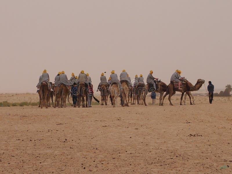 骆驼有蓬卡车在非洲大陆的北部的撒哈拉大沙漠 库存图片