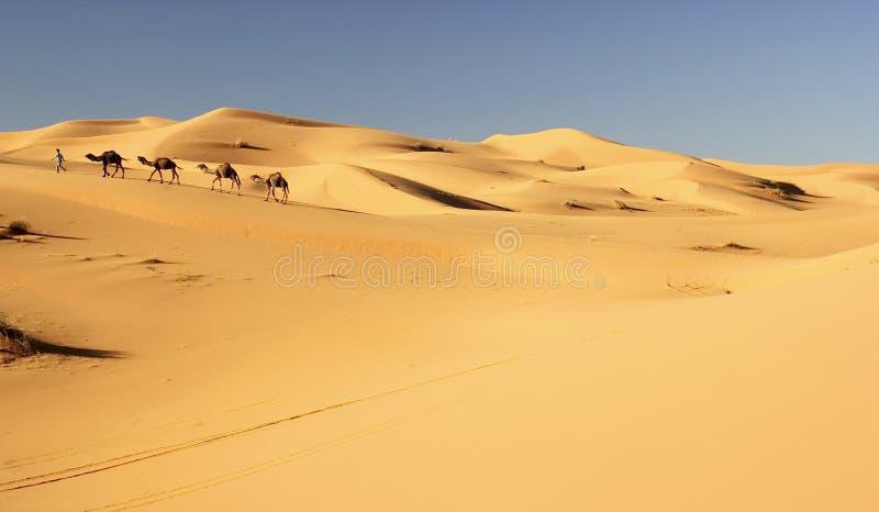 骆驼有蓬卡车 图库摄影