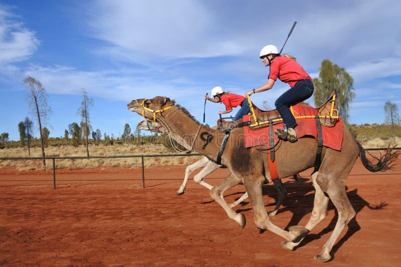 骆驼比赛在Uluru Yulara北方领土澳大利亚 库存照片