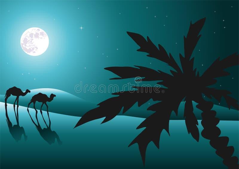 骆驼沙漠晚上