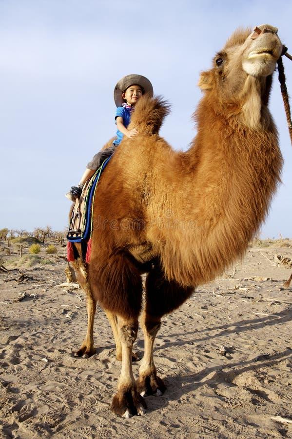 骆驼的男孩 免版税图库摄影