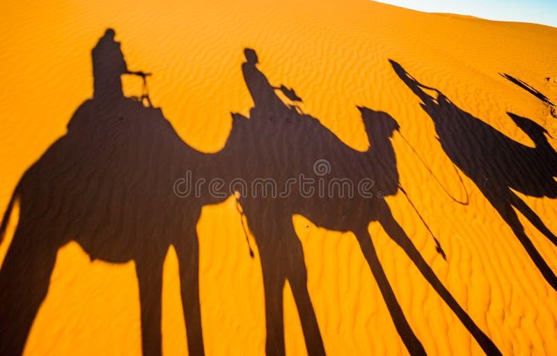 骆驼的阴影在撒哈拉大沙漠-摩洛哥的沙子的 库存照片