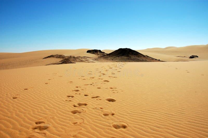 骆驼跟踪 免版税库存图片