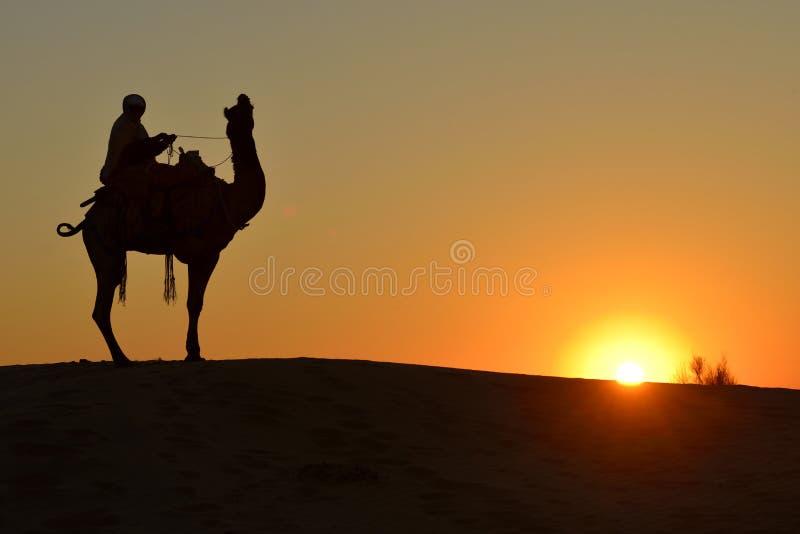 骆驼车手和骆驼在Jaisalmer,印度 库存图片