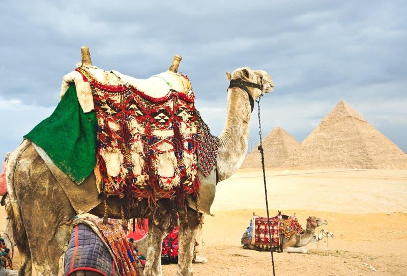 骆驼金字塔 免版税图库摄影