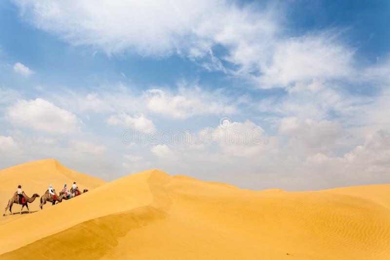 骆驼队在沙漠 库存图片