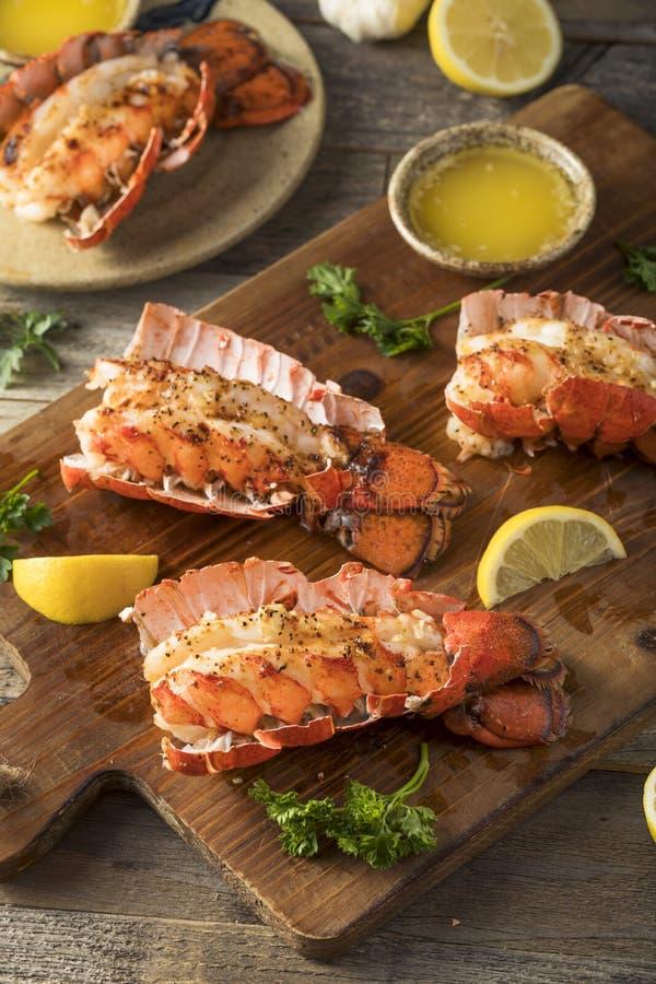 经验丰富的被烘烤的龙虾仁 免版税库存图片