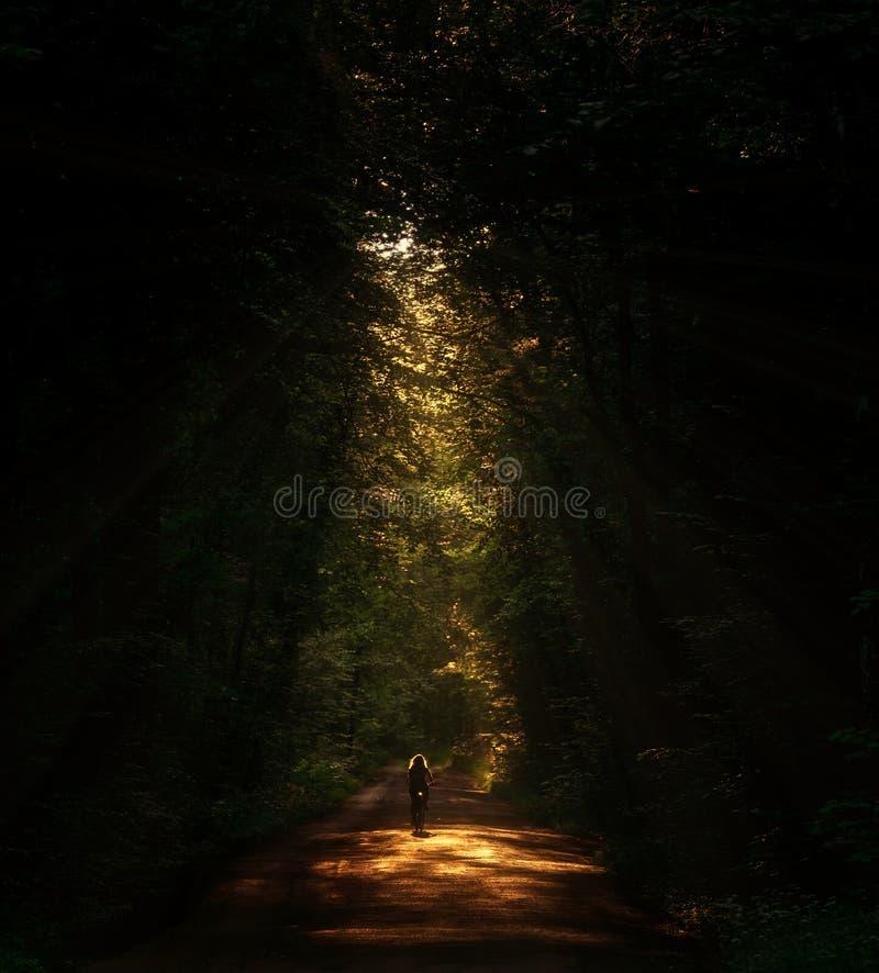 骑一辆自行车的妇女在森林里 库存照片