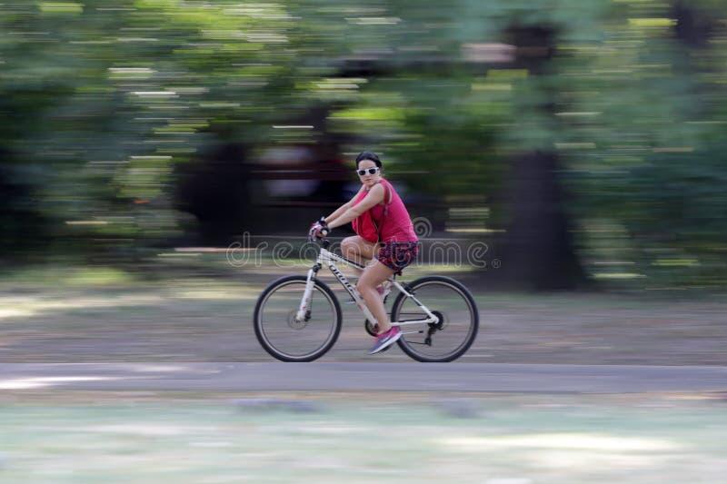 骑一辆自行车的少妇在公园 库存图片