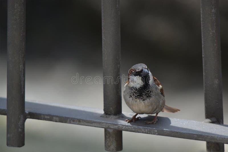 骑墙观望的鸟 库存图片
