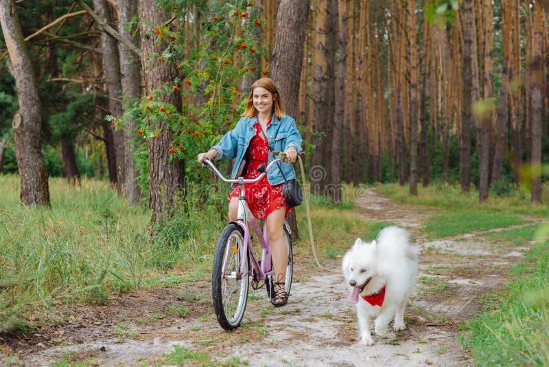 骑自行车和保持与白色爱斯基摩的美丽的妇女狗领先 库存图片