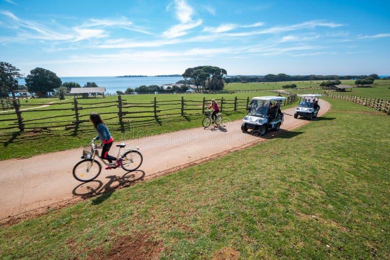 骑自行车和驾驶电高尔夫车的游人在徒步旅行队公园在Veliki Brijun海岛 库存图片
