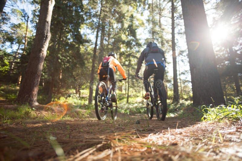 骑自行车的人夫妇骑马登山车在森林里 图库摄影