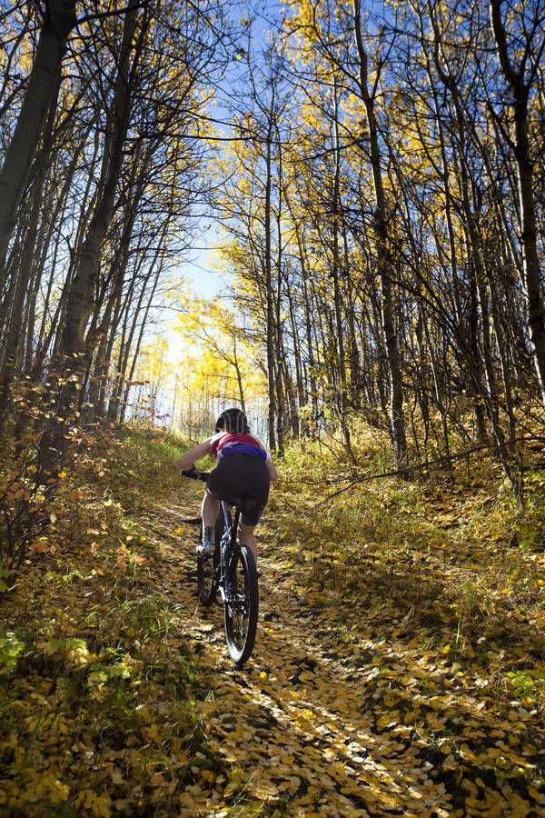 骑自行车的山妇女 库存照片