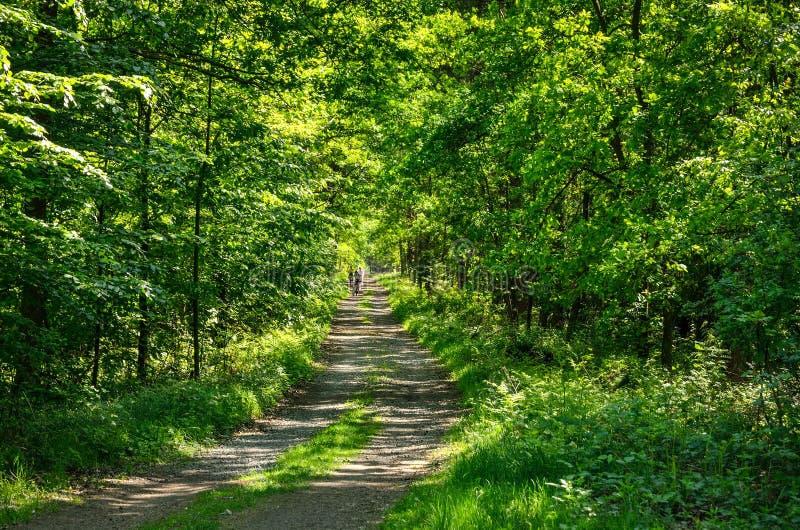 骑自行车者在森林里 图库摄影