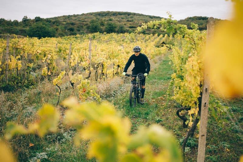 骑自行车者骑马在葡萄园里 库存照片
