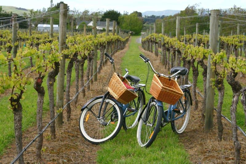骑自行车葡萄园 免版税库存照片
