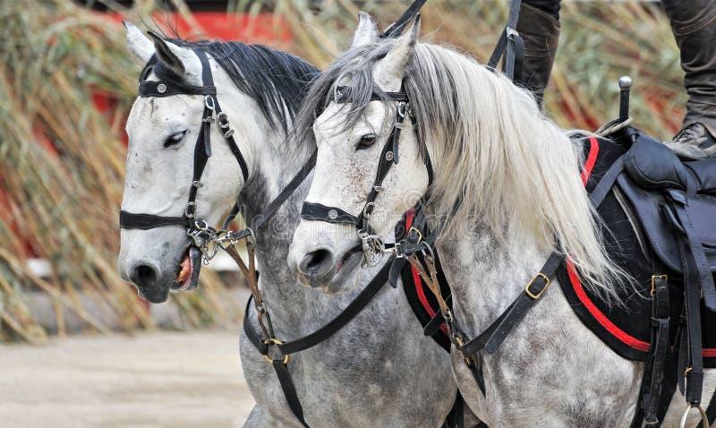 骑马显示 免版税库存照片