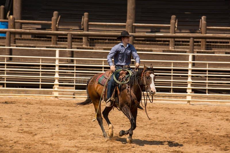 骑他的在沉材南达科他圈地的牛仔马 免版税库存照片