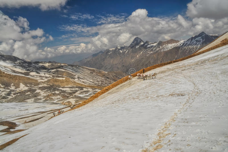 骡子在喜马拉雅山 免版税图库摄影