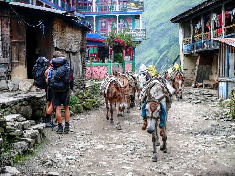 骡子在Jagat村庄-尼泊尔 库存照片