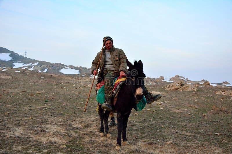 骡子的阿塞拜疆牧羊人 免版税库存照片