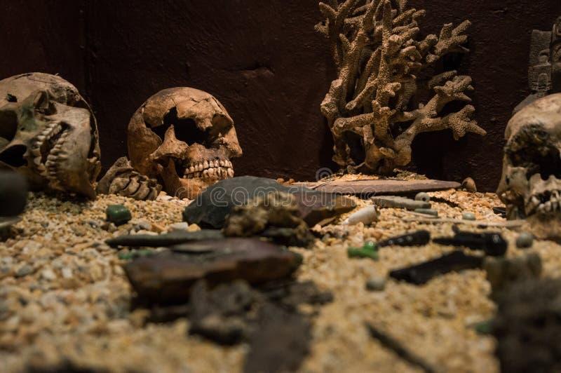 头骨、沙子和珊瑚 免版税库存图片