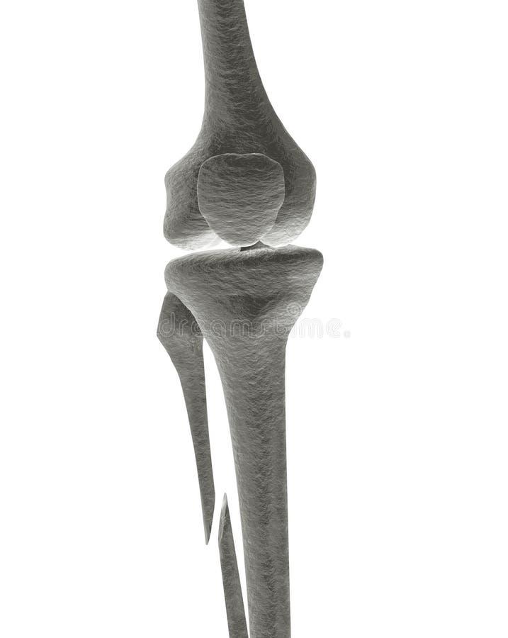 骨头断腿光芒x 库存例证
