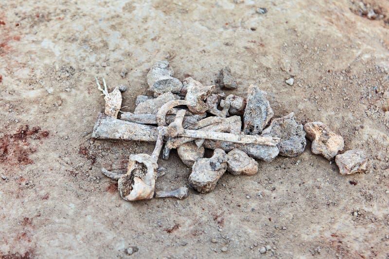 骨头的零件在地面上的 考古学塞浦路斯挖掘kato paphos公园 人的遗骸的关闭 库存照片
