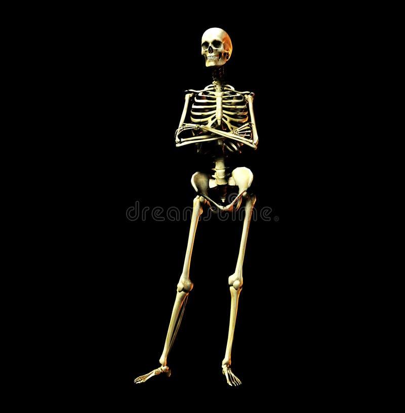 骨头11 向量例证