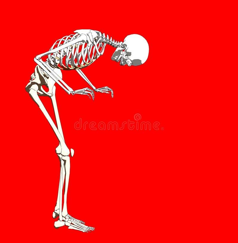 骨头250 皇族释放例证