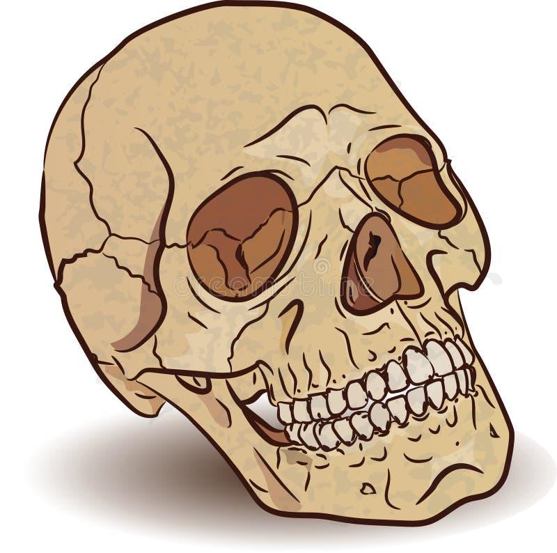 头骨是手拉的 向量例证