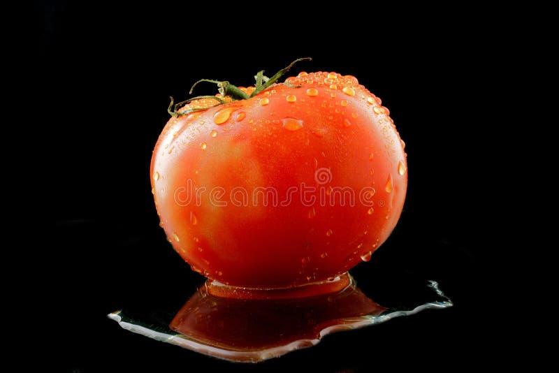 骨肉蕃茄 库存照片