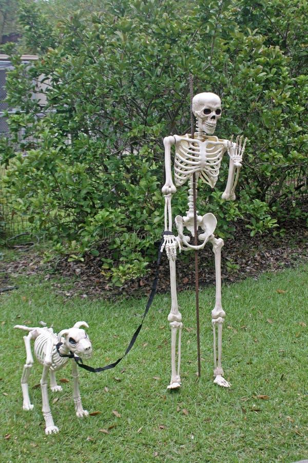 骨骼和他最基本的狗 库存图片