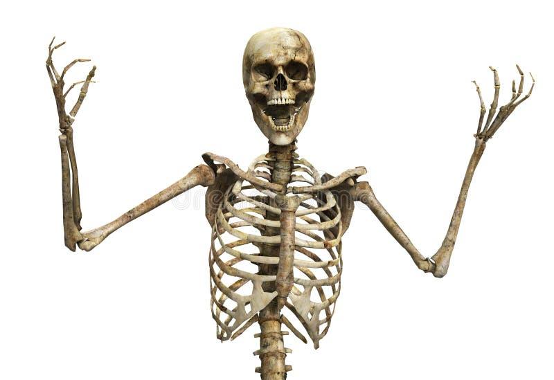 骨骼尖叫 皇族释放例证
