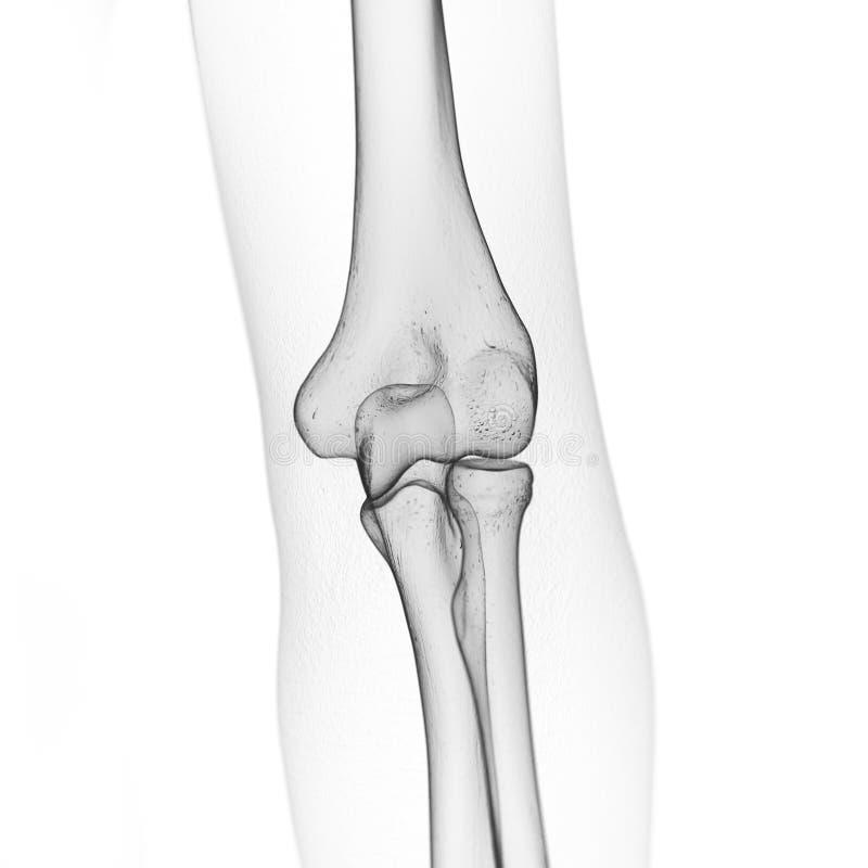 骨骼手肘 库存例证